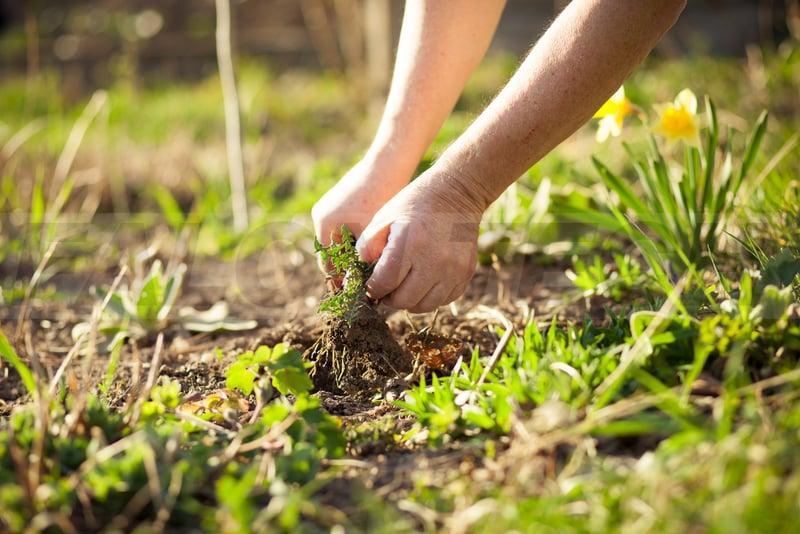 Wiosna w pełni! Najlepsze akcesoria do ogrodu i nie tylko – lista